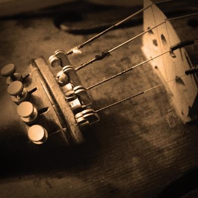 'Violin' © Steve Poole