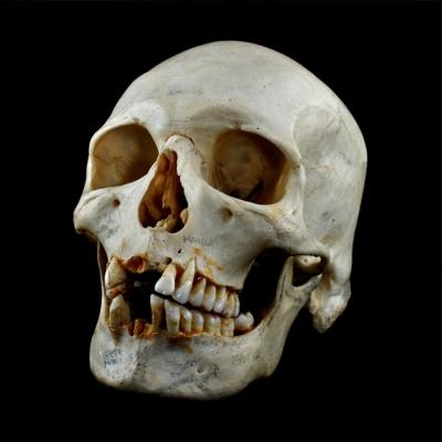 'Skull' © Steve Poole